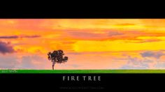 "Award winning photographer and Riverina local, Rocco Pirrottina, recently launched a website where the image ""Fire Tree"" is available as a wallpaper for your computer http://www.roccopirrottina.com/-/galleries/frontpage/-/medias/dbeb23ec-d43c-11e3-a799-f2b86e40979d-ancient"