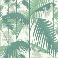 Cole & Son  Palm Jungle Wallpaper - 95/1002 ($110) ❤ liked on Polyvore featuring home, home decor, wallpaper, backgrounds, green, leaf wallpaper, paper wallpaper, jungle wallpaper, green leaf wallpaper and green leaves wallpaper