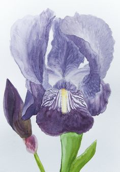 Watercolor, flower