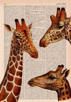 Giraffes meeting  Dictionary Book Print  Altered art on by PRRINT, $6.99