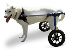 Dog Wheelchair - For Medium Dogs 26-69 lbs - By Walkin' Wheels Dog Wheelchair - For Medium Dogs 26-69 lbs - By Walkin' Wheels Size: Medium 1212 Our Walkin' Read more http://dogpoundspot.com/dog-luxury-store-1816/ Visit http://dogpoundspot.com for more dog review products