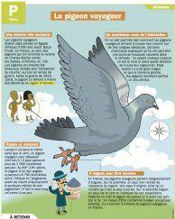 Le pigeon voyageur - Mon Quotidien, le seul site d'information quotidienne pour les 10-14 ans !