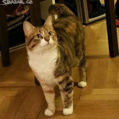 Daruji, krásnou kočičku, Majdalenku. Je kastrovaná a - obrázek číslo 1