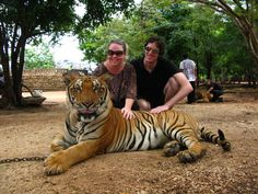 Close Encounter at Thailand's Tiger Templehttp://travelwithbender.com/travel-blog/bangkok/close-encounter-at-thailands-tiger-temple/ @Erin Bender