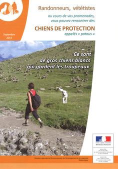 """Informations sur les """"Patous"""" (chiens gardant les troupeaux) 1/3"""
