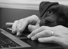 Puppies using laptops incorrectly
