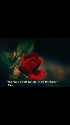 THE BLOOD OF THE PRICK Rumi Love Quotes, Wisdom Quotes, Positive Quotes, Inspirational Quotes, Strong Quotes, Rumi Poem, Jalaluddin Rumi, Buddha, Rose Quotes