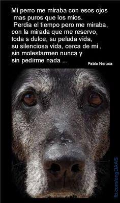 Hoy han matado a un perro para proteger a la humanidad del ébola sin darle la oportunidad de una cuarentena. Le habrán mirado a los ojos?