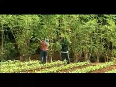 Discovery Channel documentary  Moringa - The Miracle Tree