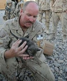 1000+ images about Soldiers with cats on Pinterest | Soldiers ...