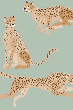 Iphone Background Wallpaper, Aesthetic Iphone Wallpaper, Aesthetic Wallpapers, Jaguar Wallpaper, Cheetah Wallpaper, Logo Animal, Posca Art, Cute Patterns Wallpaper, Cute Backgrounds