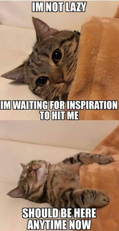 Cute animal memes · life am i right cute cat memes, cat memes hilarious, sad cat meme, Cute Cat Memes, Funny Animal Jokes, Cute Funny Animals, Funny Animal Pictures, Cute Baby Animals, Funny Dogs, Funny Puppies, Funny Animal Sayings, Funny Cat Quotes