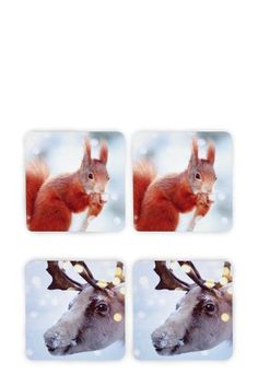 Set Of 4 Animal Coaster from Next