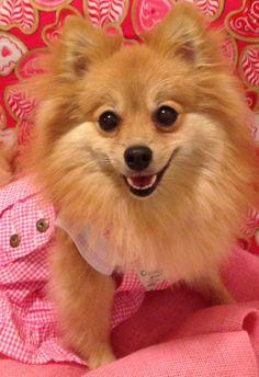Baby Gia, my little Pomeranian