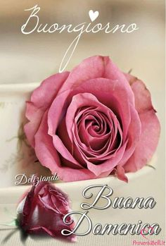 Buongiorno Domenica Immagini Belle per Whatsapp - ProverbiBelli.it Good Morning Good Night, Day For Night, Italian Greetings, Anger Quotes, Dp For Whatsapp, Flirting Quotes, Birthday Quotes, Floral, Facebook