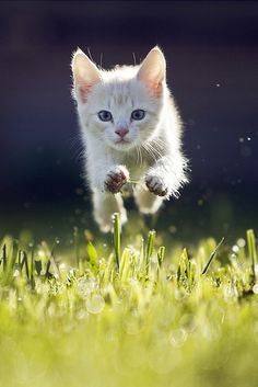 heaven-ly-mind: Kitty by Maris Ojasuu on 500px