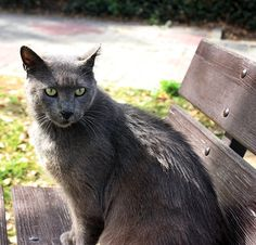 A cat called Grey