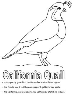 Free Online Pictures of Birds to Color for Adults and Kids Bird Coloring Pages, Coloring Pages For Kids, Adult Coloring, Colouring, Wood Badge, Bird Quilt, State Birds, Bird Crafts, Bird Patterns