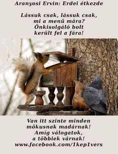 Aranyosi Ervin: Erdei étk Bird Cage, Poems, Animals, Animaux, Poetry, Animales, Verses, Bird Cages, Birdcages