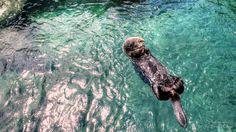 Take it easy by Ernie Kasper on Vancouver Aquarium, Stanley Park, Take It Easy, British Columbia, Lion Sculpture, Statue, Sculptures, Sculpture