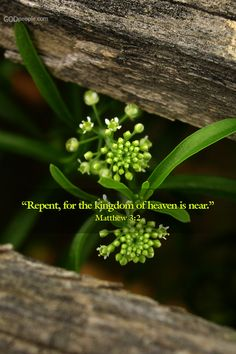 "Matthew 3:2  ""Repent, for the kingdom of heaven is near!"""