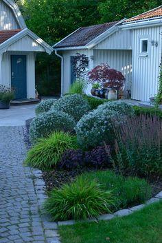 Klippta havtornsklot Back Gardens, Outdoor Gardens, Landscape Design, Garden Design, Garden Gadgets, Porche, Garden Cottage, Garden Pictures, Garden Borders