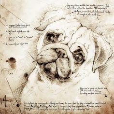"""""""Pug Face"""" Detail of a Da Vinci style drawing"""