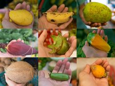 The Cornucopia of Delights Maldives, Pear, Fruit, Food, The Maldives, Essen, Meals, Yemek, Eten