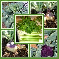 "Growing Organic : Meet the ""Not So Popular"" Spring Crops"