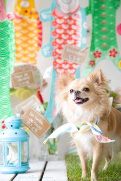 プリンスくんとプリンセスちゃんをお待ちしていま〜す の画像|kumako studio わんこのフォトスタイリスト®くまこ:オフィシャルブログ