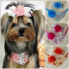 Dog Grooming Salons, Dog Smells, Dog Clothes Patterns, Pet Paws, Pet Fashion, Dog Bows, Cute Dogs And Puppies, Dog Sweaters, Losing A Pet