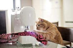Any day spent sewing, is a good day. | Flickr - Photo Sharing!