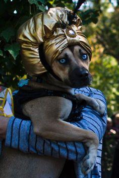 Pet Animal Halloween Costume