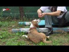 Un cane ben educato? Ecco come insegnargli a fare il TERRA..