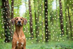 Photographer Lives Her Dream By Taking Expressive And Playful Dog Photos | Bored Panda