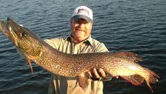 Top 5 Best Northern Pike Fishing Tips to help you learn how to catch big trophy northern pike!    Photo Courtesy of Canoe Canada Outfitters, Atikokan, Ontario.