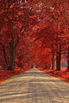 Wye Island Ruby Road - Maryland - USA by Nicolas Raymond