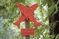 Salmon Crossing - Samuel P. Taylor State Park, Lagunitas, CA