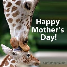 HAPPY MOTHER'S DAY   from Signs of Angels