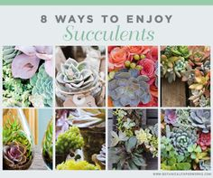 Sneak a peak at 8 stunning ways to enjoy succulents this summer.