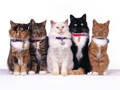 Cute Cats Family