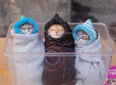 Cute organizational spoof article: 20 Brilliant Ways To Organize Your Cats -- #19. Purritos