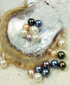 Gold Golden bouton rond Cultured Freshwater Pearl Clous d/'oreilles silver stick