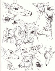 Deer Face Studies by Paso