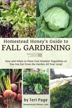 [SHOCKING] => If you are truly in love with How to grow a survival gardening, it's not a big surprise . Many of us lose time to rework simple tasks over and over again because we don't know this simple test. Click on the link to discover it today. This won't last long