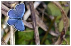 Azzurra by Nicola Di Nola on 500px
