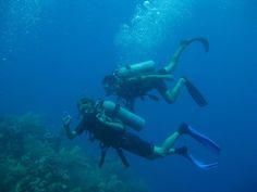 Divers, Central America Trail| Dive, travel and volunteer for Marine Conservation at www.frontiergap.com | #dive