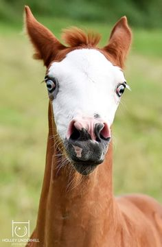 Beautiful Gorgeous, Beautiful Horses, Funny Horse Pictures, Animal Kingdom, Giraffe, Faces, Gallery, Cute, Nature