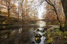 https://flic.kr/p/AFnDo1 | Misty Autumn | A very misty / foggy day in the lakes today, the sunrise didn't happen, well it did but you wouldn't know.... after shooting dawn at Rydal I headed off towards Elterwater, on the way I saw this and it played on my mind so I turned back for a second look, glad I did as this turned out well, little bit of morning mist, no wind, and with the lovely Autumnal colours really coming through now made for an appealing place to spend 30 minutes or so, this…