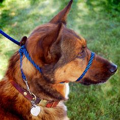 we love this lightweight, adjustable head halter. while its not for dogs with serious issues on-leash, it works well for many. great for rescues and shelters, because it fits any dog!